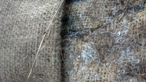 burlap before and after spawning